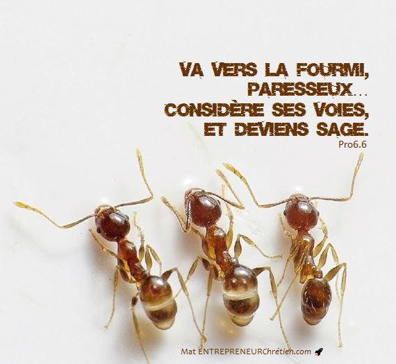 Apprendre-de-la-fourmi